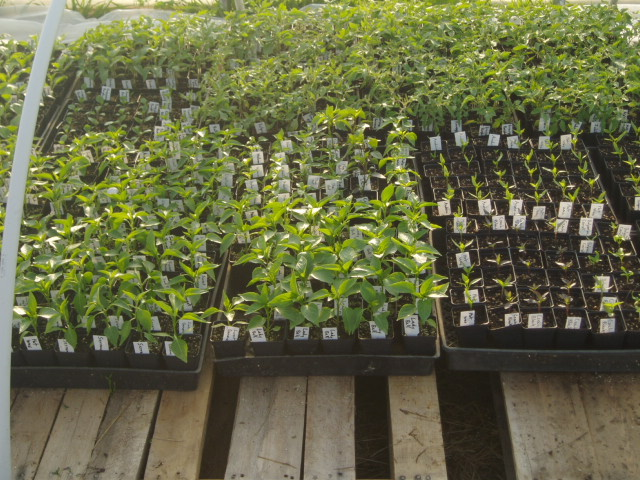 vegetable plants in containers ready to ship and plant